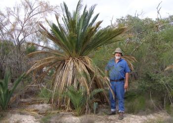 Environmental-Flora-Macrozamia-tree-on-Marchagee-Track